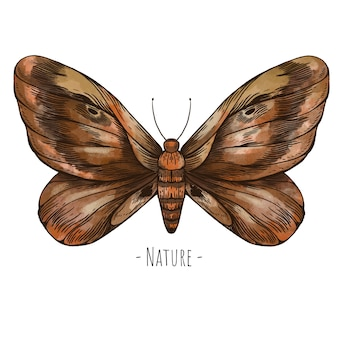 Moth vintage greeting card. forest treasures illustration isolated on white background.