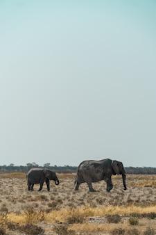 母親とふさふさしたフィールドを歩いて象の赤ちゃん