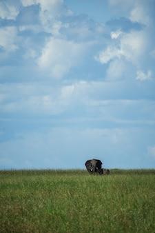 Мать и слоненок в серенгети