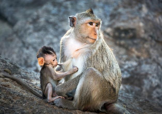 野生の自然の中で母親と赤ちゃんのサル。