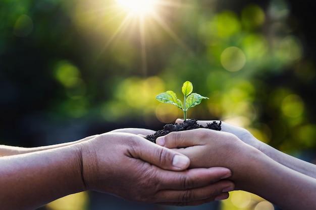 母と子が緑の自然に日光で若い植物を保持しています。コンセプトエコアースデー