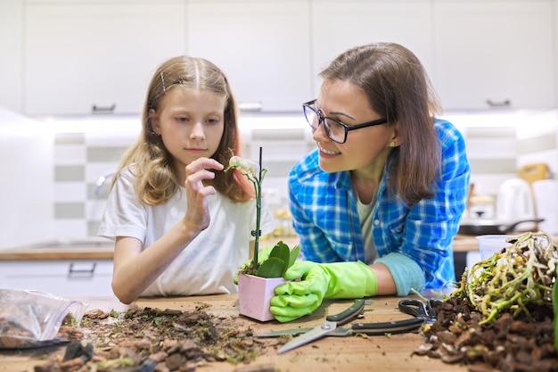 엄마와 딸 아이 함께 냄비에 호접란 난초 식물 심기, 부엌 인테리어 공간