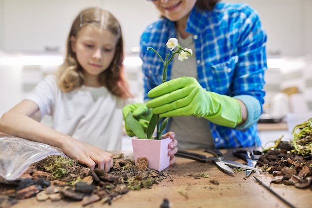 어머니와 딸이 함께 냄비에 호접란 식물을 심는 부엌에서