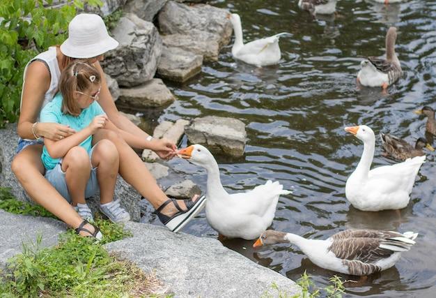 엄마와 아이가 연못에서 거위에게 먹이를줍니다