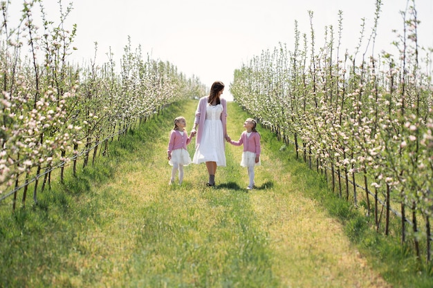 어머니와 쌍둥이 딸이 손을 잡고 봄에 피는 사과 과수원을 걸어갑니다.