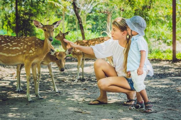 熱帯動物園で手から美しい鹿に餌をやる母と息子。