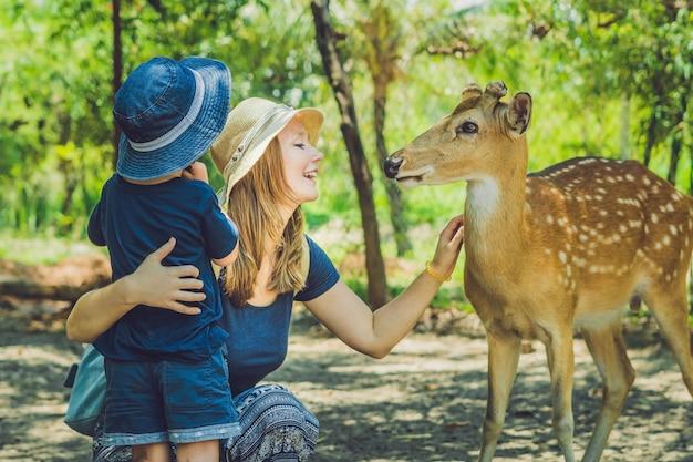 Мать и сын кормят красивых оленей из рук в тропическом зоопарке