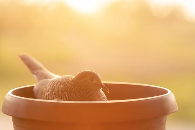 Мать птица и люк в гнезде