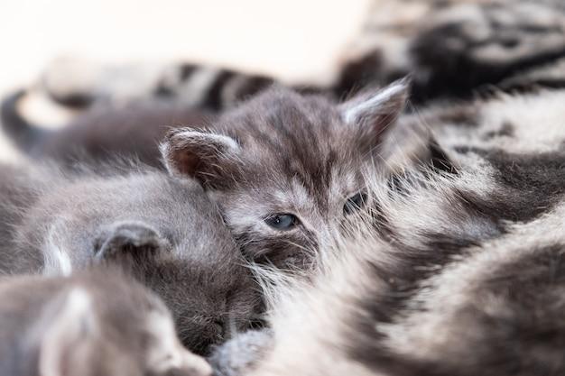 Mother cat nursing her kittens
