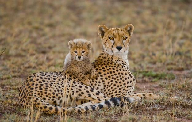 サバンナの母チーターと彼女の子。