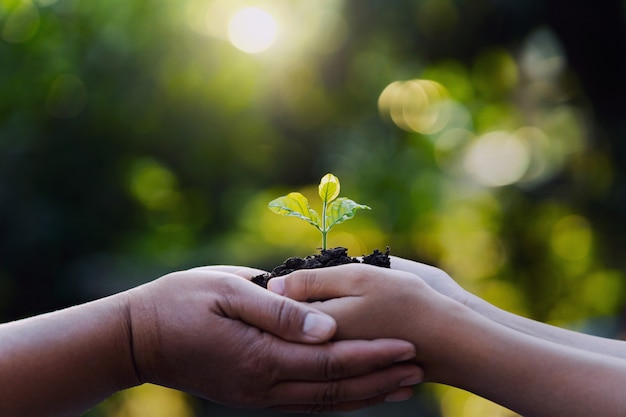 Mother and child holding young plant with sunlight on green nature. concept eco earth day