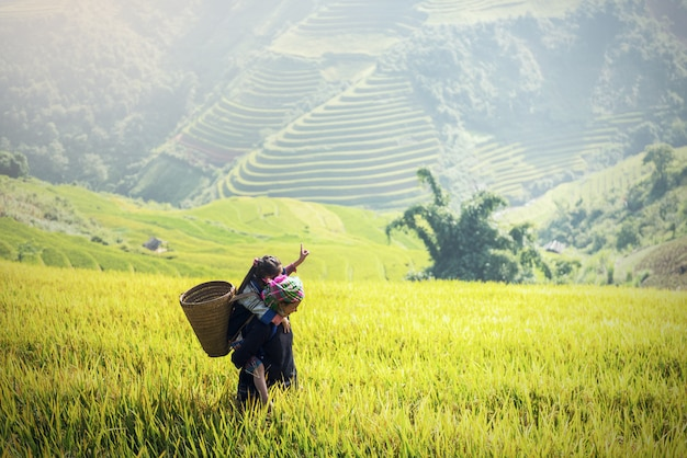 Mother and daughter hmong, working at vietnam rice fields on terraced in rainy season