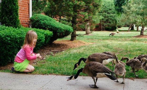 Mother goose leads gosslings across field toward