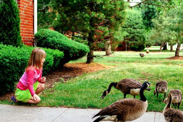 Mother goose leads gosslings across field