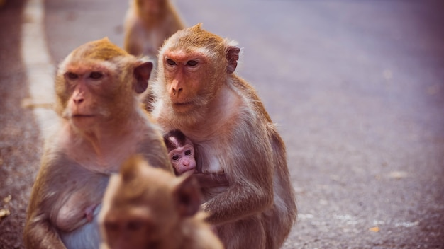 Mother and her baby monkey.  monkeys macaque Premium Photo