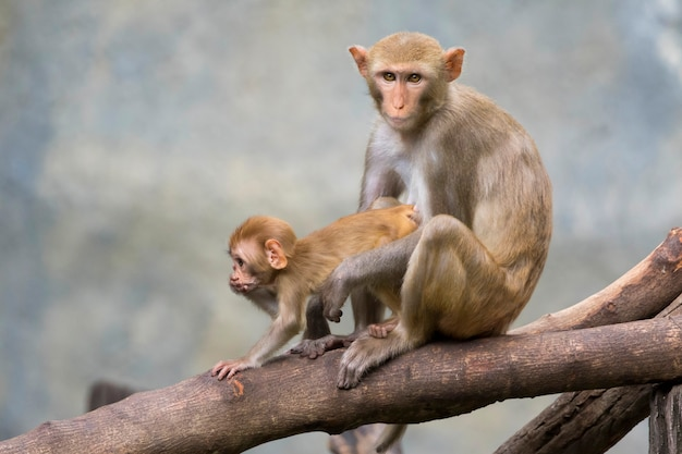 母猿と赤ちゃん猿が木の枝に座っています。