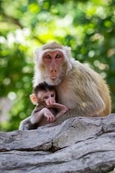 母猿と赤ちゃん猿。野生動物。