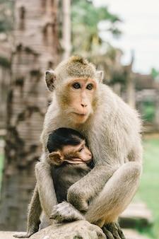 Мать обезьяна и сын в ангкор-вате в камбодже