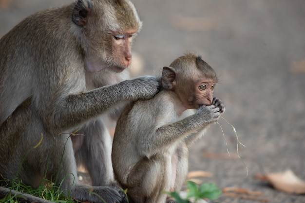 The mother monkey and baby monkey are sitting in the forest.
