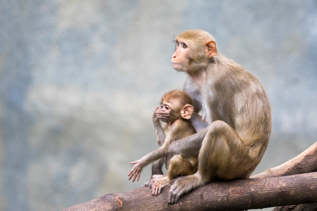 Mother monkey and baby monkey sitting on a tree branch.