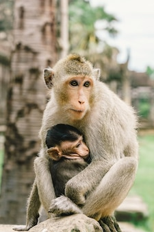 Mother monkey and son at angkor wat in cambodia