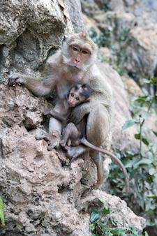 岩の上に赤ちゃん猿と母猿
