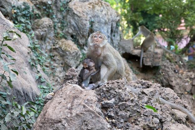 背景が緑色の赤ちゃん猿と母猿