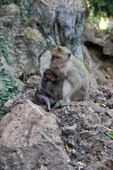 緑の背景を持つ赤ちゃん猿と母猿