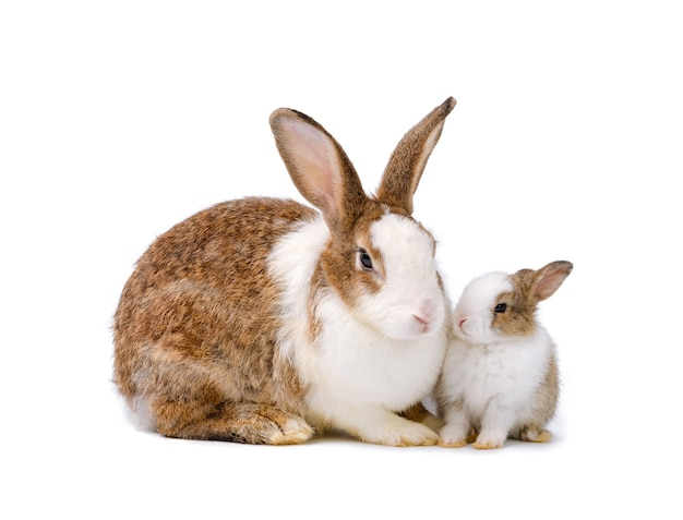 分離された新生児のウサギと一緒に座っている母ウサギ