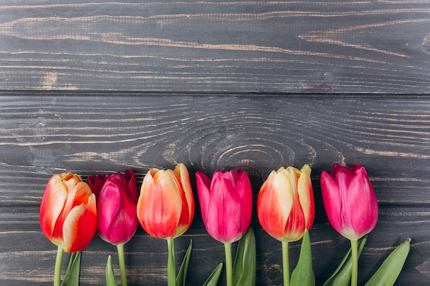 Mother's day.valentine's day.birthday.pink tulips with copy space.