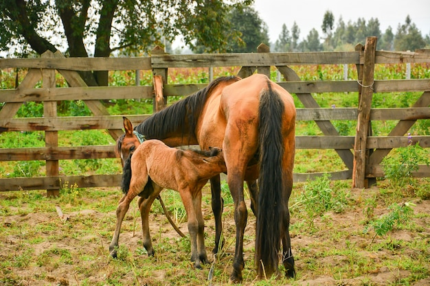 Mother and young horse