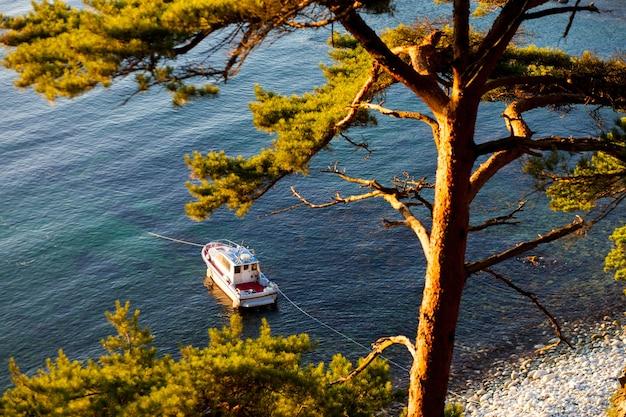 海岸に松の木がある湾のモーターボート