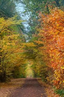 自然の小道を歩いている息を呑むような秋の森のモーターサイクリスト。