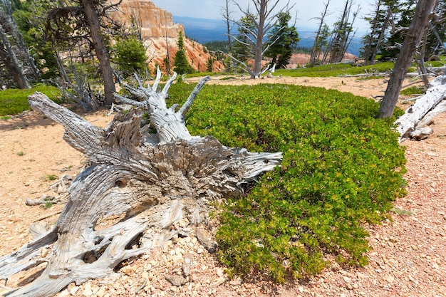 Mouldering dry tree against rocky mountains.