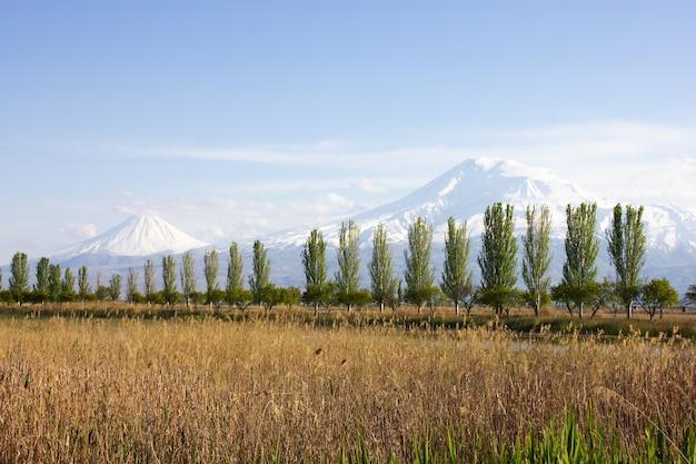 昼間のアララト山と木々