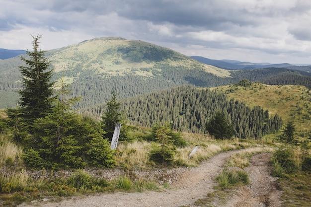 저녁에 키브친 산과 소나무 숲, 카르파티아 산맥, 루마니아-우크라이나 국경