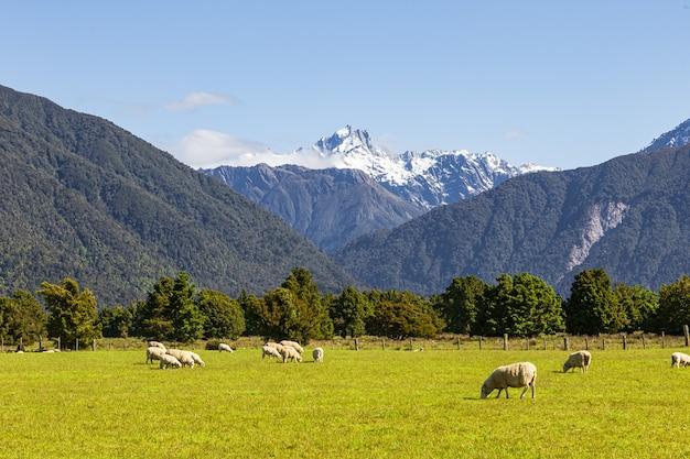 Гора кук гора тасман южный остров новая зеландия
