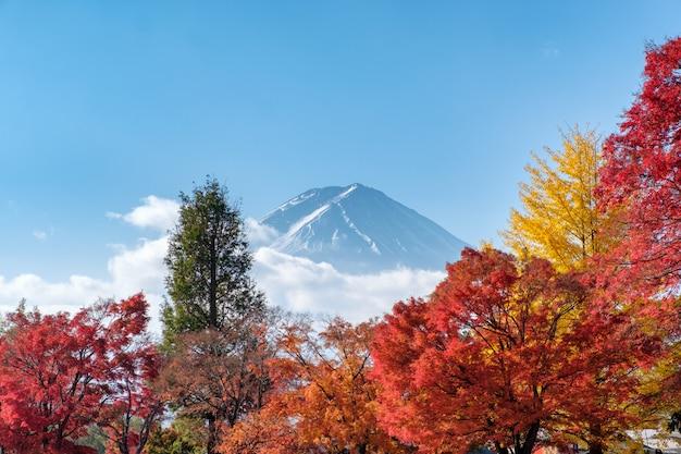 Mount fuji on maple garden in autumn season