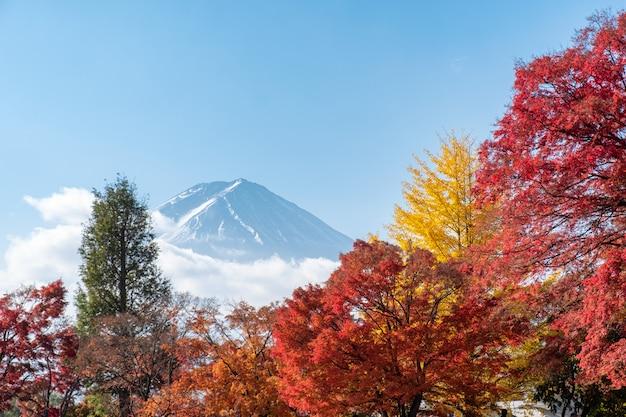 Mount fuji on maple garden in autumn