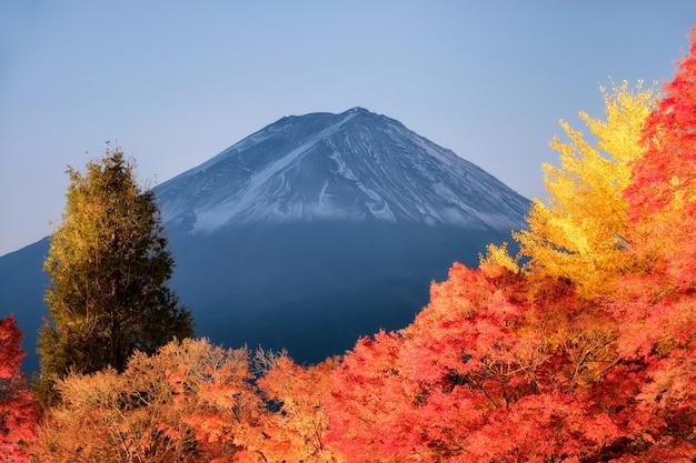 일본 야마나시 현 가와구치 코 호수의 라이트 업 가을 축제의 붉은 단풍 정원 위의 후지산