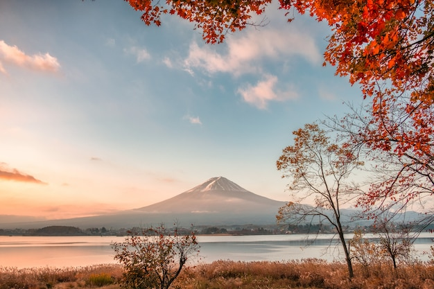 Mount fuji with maple leaves covered in autumn