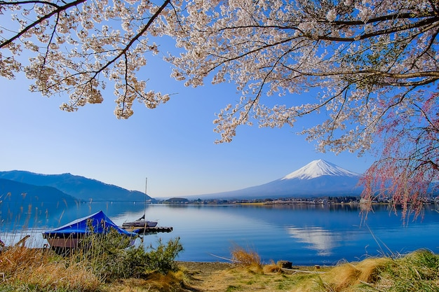 Mount fuji with snow capped, blue sky and beautiful cherry blossom