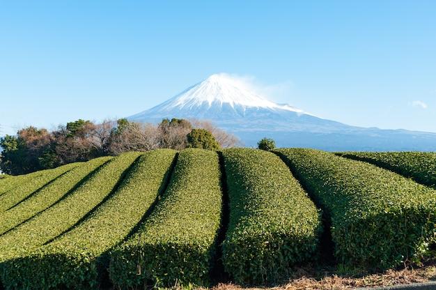 Mount fuji with snow and green tea plantation in fujinomiya city japan