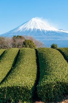 Mount fuji with snow and green tea plantation fujinomiya city shizuoka prefecture japan