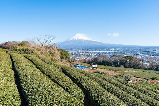 Mount fuji with snow and green tea plantation in fujinomiya city shizuoka prefecture japan