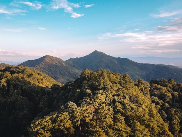 夏の山と木自然旅行