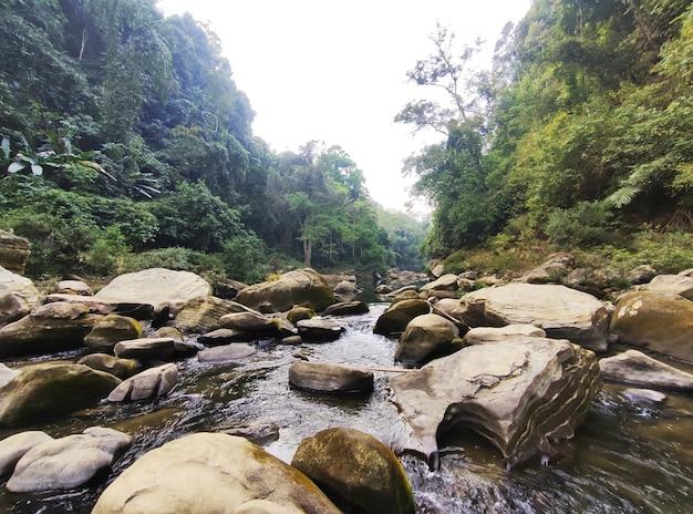 山と野生の自然の写真