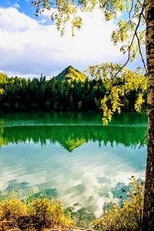 Горное осеннее зеленое сибирское озеро с отражением и веткой березы