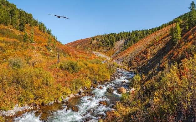 森の中を流れる山秋の川。速い川の紺碧の水と美しい高山の風景。高地の雄大な自然に力を。アルタイ山脈。