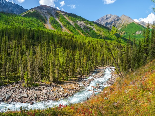 Горная осенняя река течет через лес красивый альпийский пейзаж